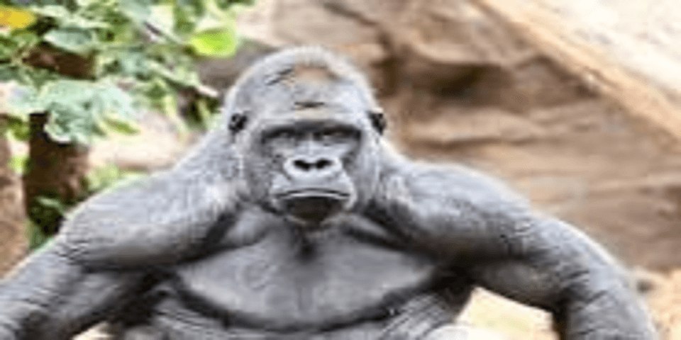 Drivers Please Help Fight The 800lb Gorilla Trucking